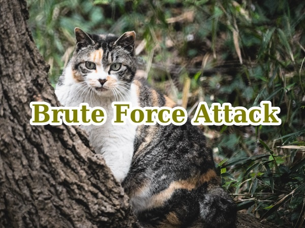 brute-force-attack01