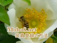 moba8